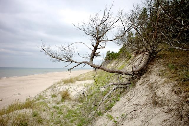 Holiday in Pape, Latvia. Apartments for rent in homestead at the sea Jekaupi - 22