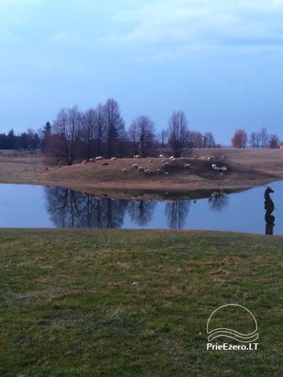 Homestead Raganyne in Kelme area, by the lake Gilius - 14