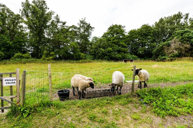 Farmstead in Vente Adeles sodyba - 51