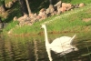Сельская усадьба возле озера Ильгис: байдарки, сауна, теннисный корт, лодки - 11