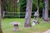 Сельская усадьба Vainiūnai в Лаздияйском регионе, Литва - 10