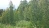 Усадьба Березовая роща в Игналинском районе на берегу водоема - 39