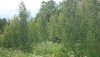 Countryside homestead Beržų giraitė in Ignalina district - 39