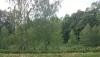 Усадьба Березовая роща в Игналинском районе на берегу водоема - 38