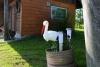 Countryside homestead Oazė in Trakai district - 14