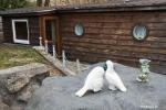 Holiday cottage for rent near the river Ratnycele in Lithuania - 9