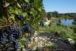 Holiday house near the vineyard for 1-6 persons / Tennis - 6