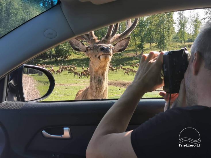 Złota jelenie jelenie z łaźnią i kempingiem w regionie Utena, Litwa - 15