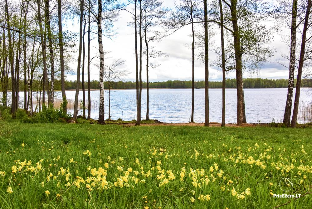 Homestead by the lake Avilys in Zarasai district, Lithuania - 35