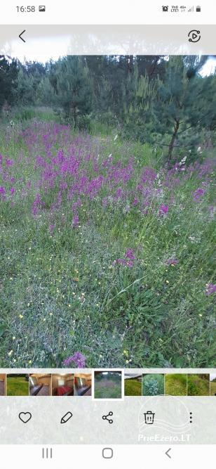 """Relaks w prawdziwej wsi - gospodarstwo wiejskie """"Las sosnowy"""" - 8"""