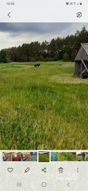 """Relaks w prawdziwej wsi - gospodarstwo wiejskie """"Las sosnowy"""" - 9"""