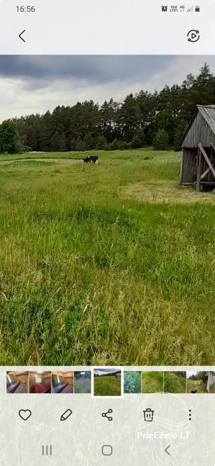 """Relaks w prawdziwej wsi - gospodarstwo wiejskie """"Las sosnowy"""" - 14"""