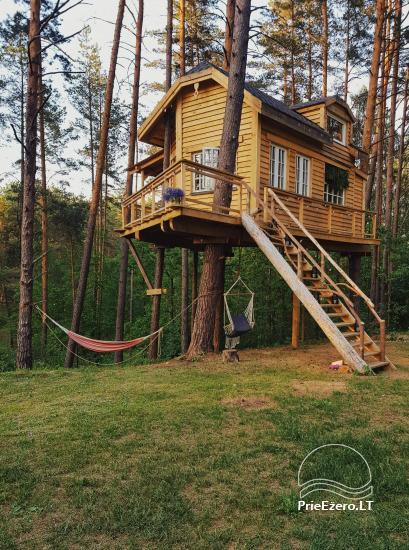 Tree house on the shore of the lake in Lithuania - 1