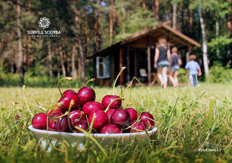 Villa for rest in Jonavos area - 11