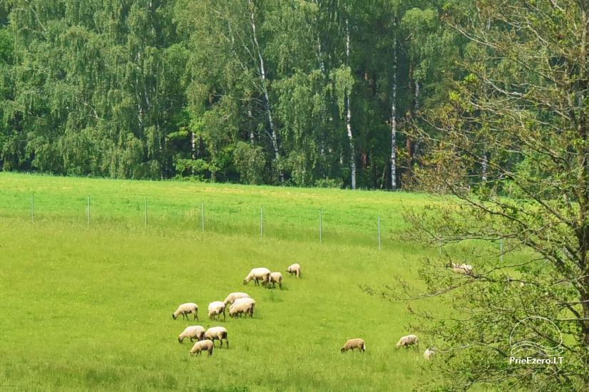 Countryside homestead near Ilmedas lake, in Lithuania, Moletai region - 32