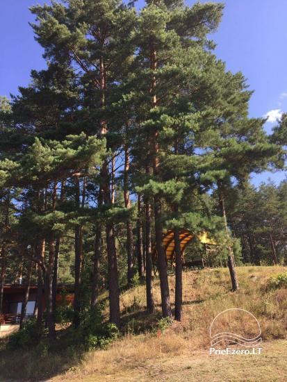 Countryside near Druskininkai on the shore of the lake - 8