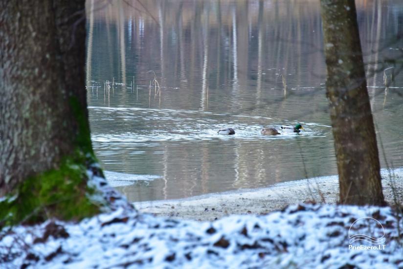 Honey bathhouse in Trakai at the lake Skasitis - 34