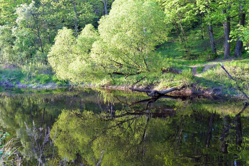 Jurbarkas manor park - 18