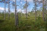 Čepkeliai Marsh – largest swamp in Lithuania